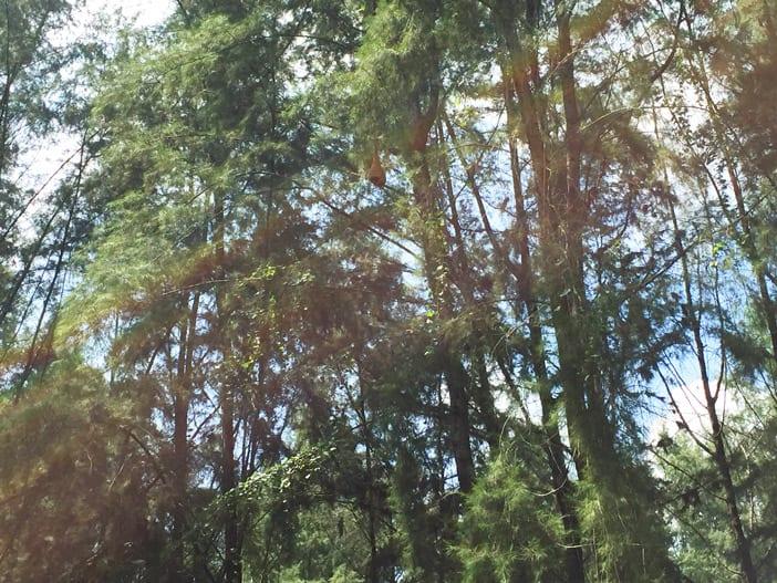 05-trees