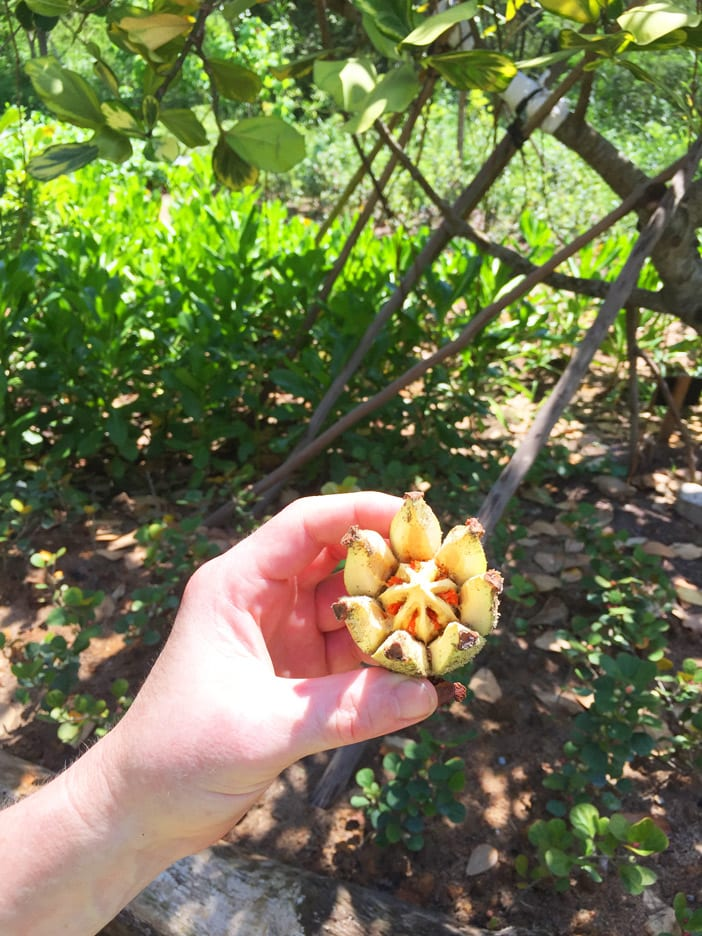 06-fruits